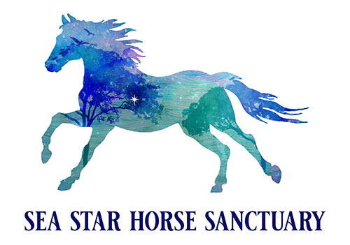Sea Star Horse Sanctuary